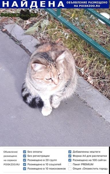 Найдена кошка сидит неделю или больше. г.Москва