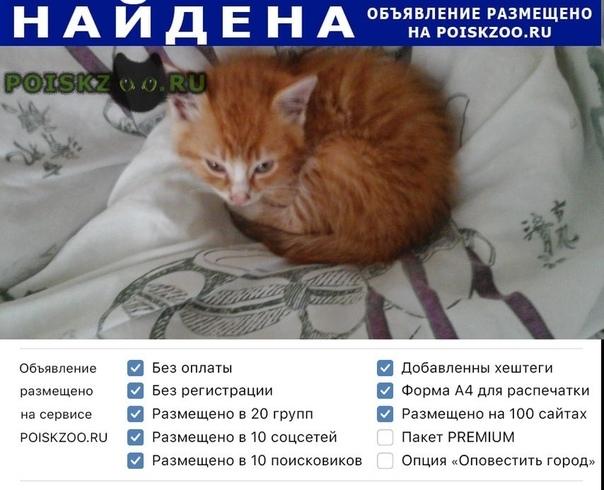 Найдена кошка Калининград (Кенигсберг)