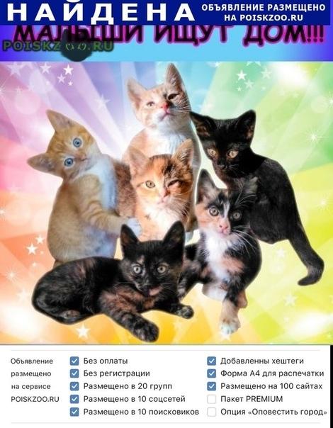 Найдена кошка несколько котят г.Щелково