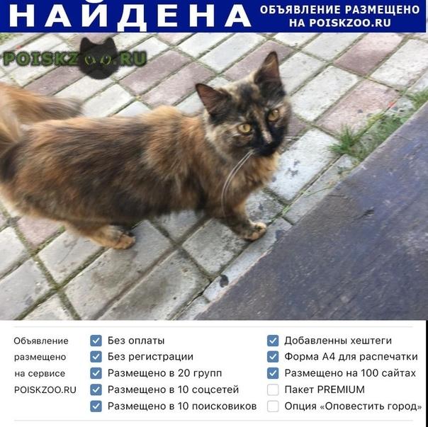 Найдена кошка г.Ашитково