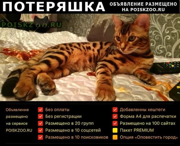 Пропало домашнее животное кот заводской район Саратов