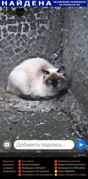 Найдена кошка домашняя г.Краснодар