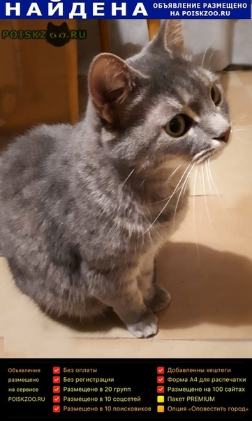 Найдена кошка серая красавица г.Москва
