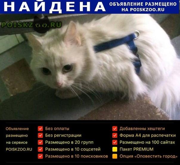 Найдена кошка в синей шлейке Москва