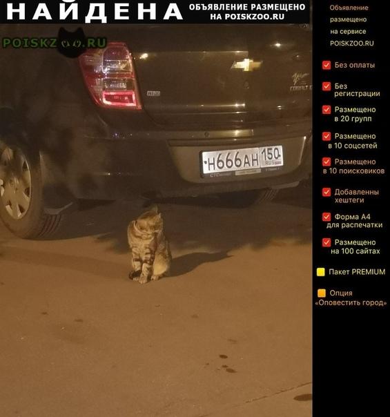Найдена кошка около дома марии рубцовой г.Химки