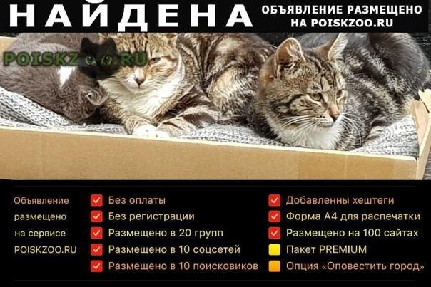 Найдена кошка подброшены домашние котята г.Москва