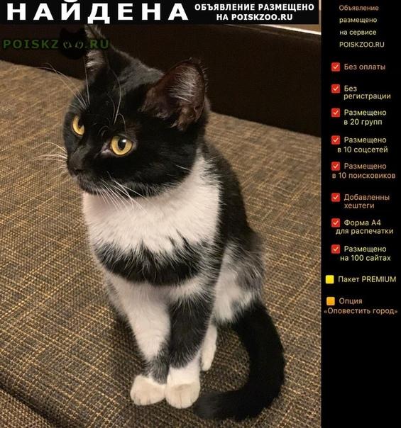 Найдена кошка г.Балашиха