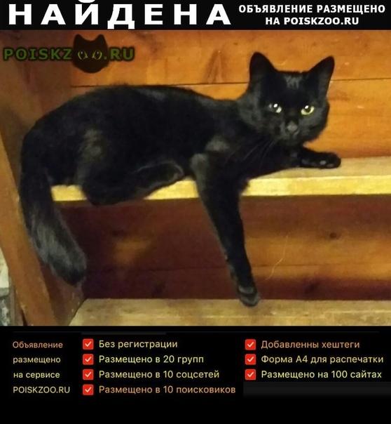 Найден кот г.Уфа
