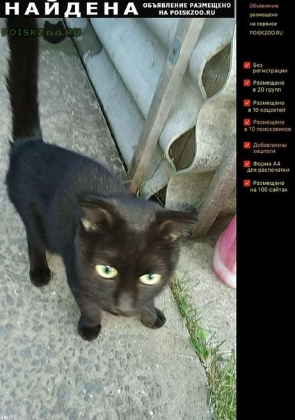 Найдена кошка молодая британка г.Ростов-на-Дону