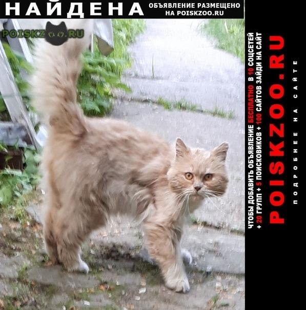 Найден кот г.Алабино