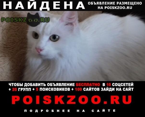 Найдена кошка очень ухоженное белая, животное г.Москва