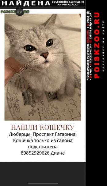 Найдена кошка возле проспекта гагарина г.Люберцы