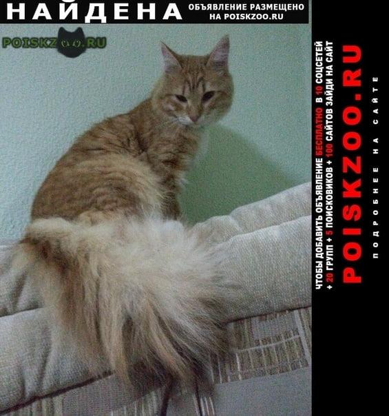 Найден кот г.Екатеринбург