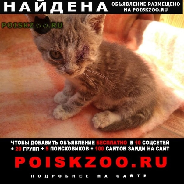 Найден котёнок без глаза г.Серпухов
