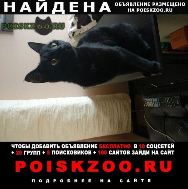 Найдена кошка чёрный окрас г.Москва