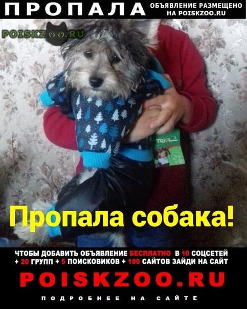 Пропала собака г.Шахты