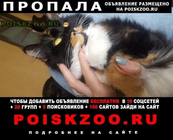 Пропала кошка любимица семьи г.Ростов-на-Дону