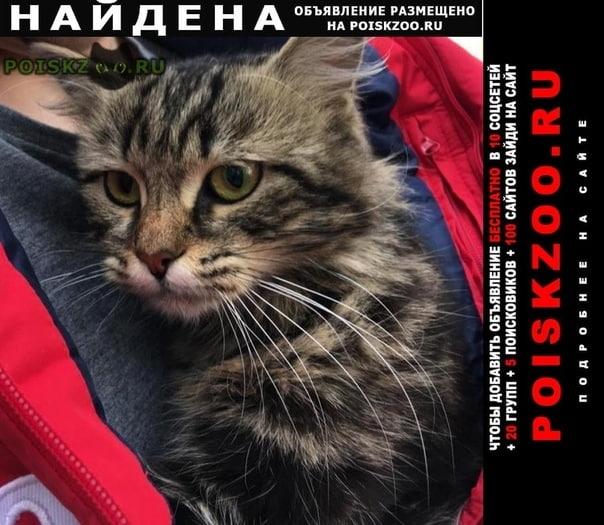 Найдена кошка кот, медведково г.Москва