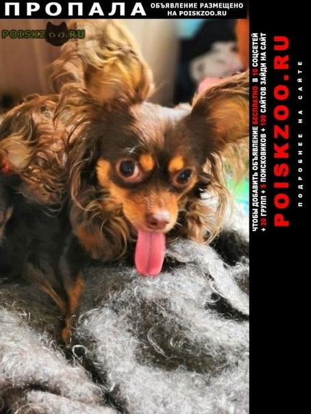 Пропала собака очень скучаю по своей любимке г.Ангарск