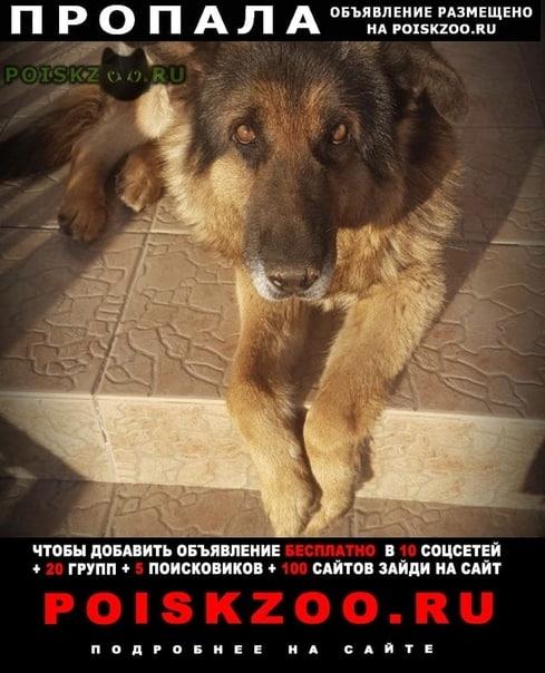 Пропала собака кобель г.Лаишево