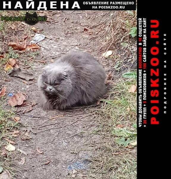 Найдена кошка г.Мичуринск