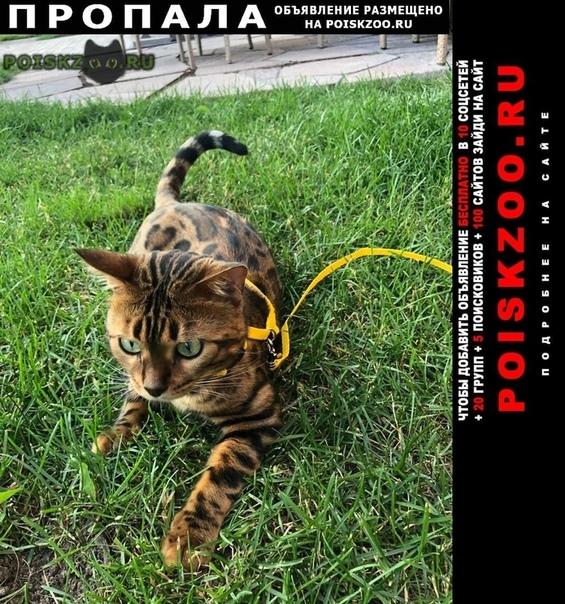 Пропал кот помогите найти любимца г.Истра