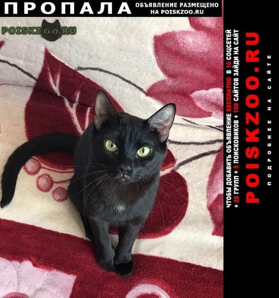Пропал кот чёрный г.Москва