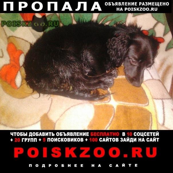 Пропала собака кобель малыш г.Петрозаводск