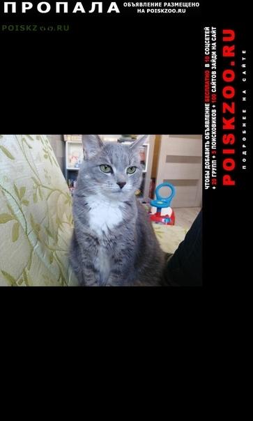 Пропала кошка. черноморский бульвар к г.Москва
