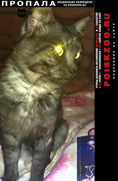 Пропал кот г.Екатеринбург