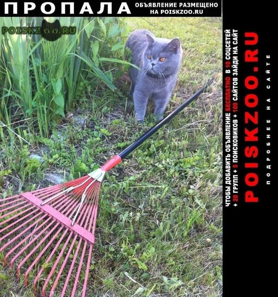 Пропал кот помогите найти г.Москва