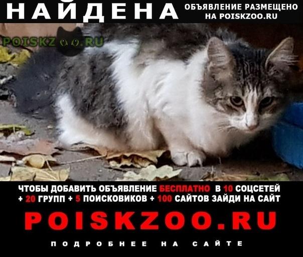 Найдена кошка домашняя белая с темными пятнами кошечка г.Москва