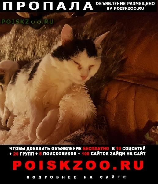 Пропал кот   г.Хотьково