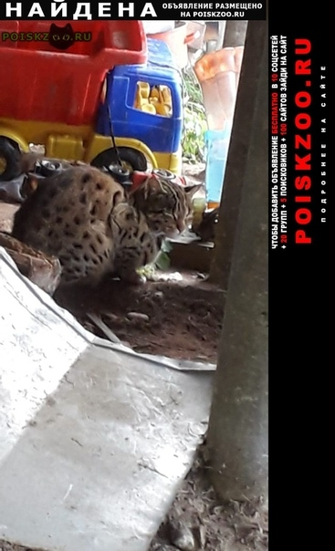 Найдена кошка г.Луга