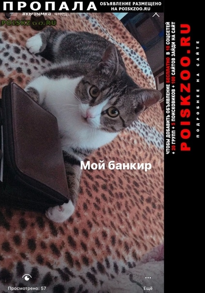 Пропала кошка кошечка, розовый ошейник  г.Казань