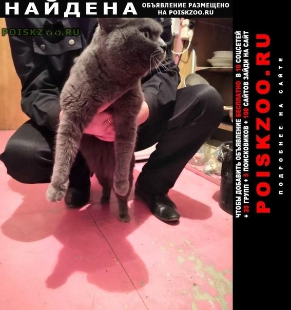 Найдена кошка в районе люблино и марьино г.Москва