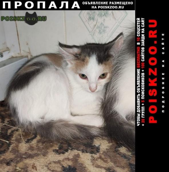 Пропала кошка город г.Воскресенск