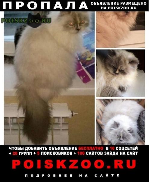 Пропала кошка г.Курган