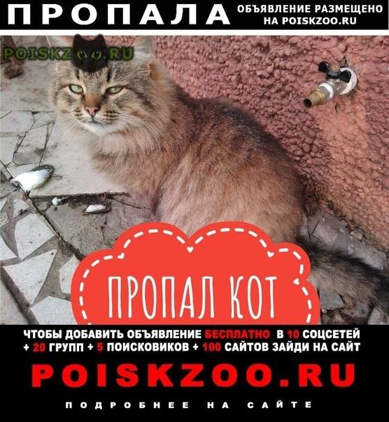 Пропал кот салтыковка г.Балашиха