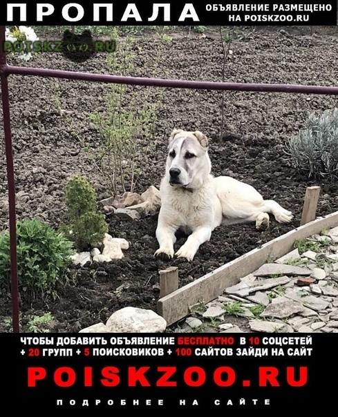 Пропала собака г.Славянск-на-Кубани