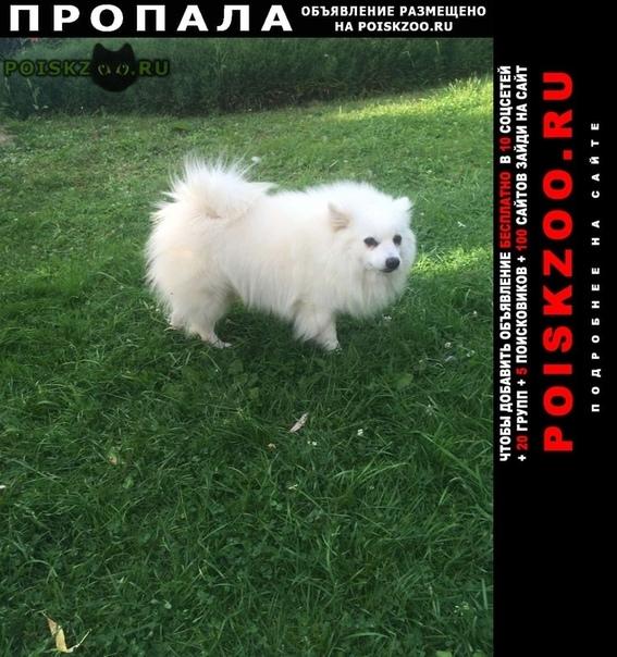 Пропала собака кобель пожалуйста помогите найти нашего малыша #; #; Юхнов