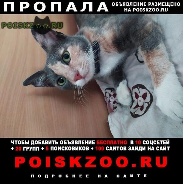 Пропала кошка. г.Гурзуф
