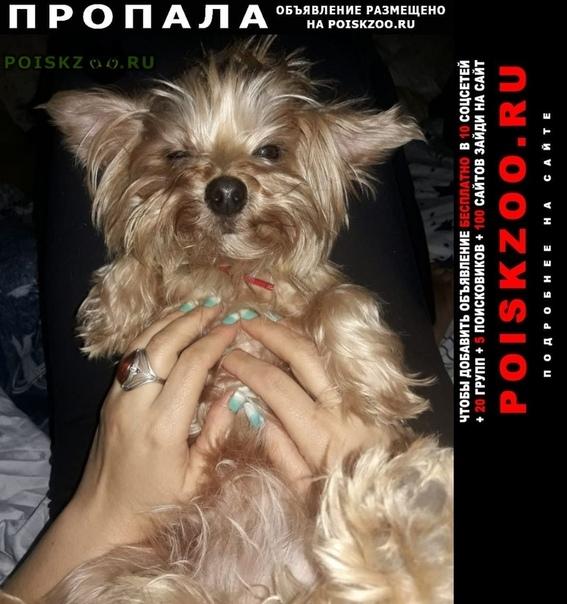 Пропала собака йоркширский терьер перово Москва