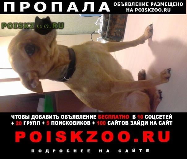 Пропала собака по кличке чапа г.Барнаул