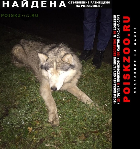 Найдена кошка в светлом г.Казань
