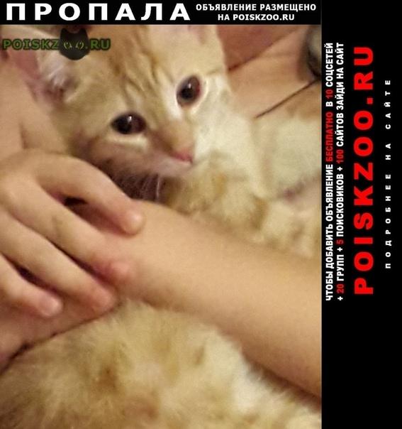 Пропал кот г.Анапа