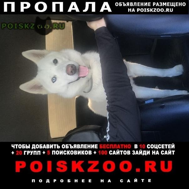 Пропала собака г.Фрязино