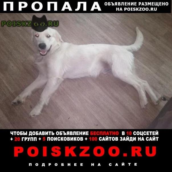 Пропала собака кобель кабель золотистый ретривер марти г.Пенза