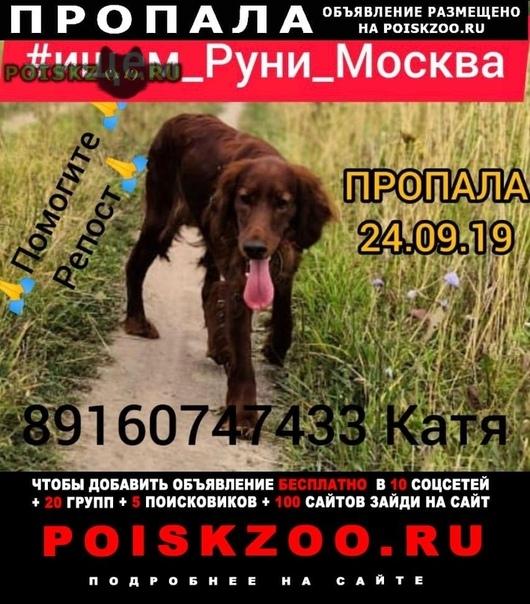 Пропала собака потерялась г.Москва