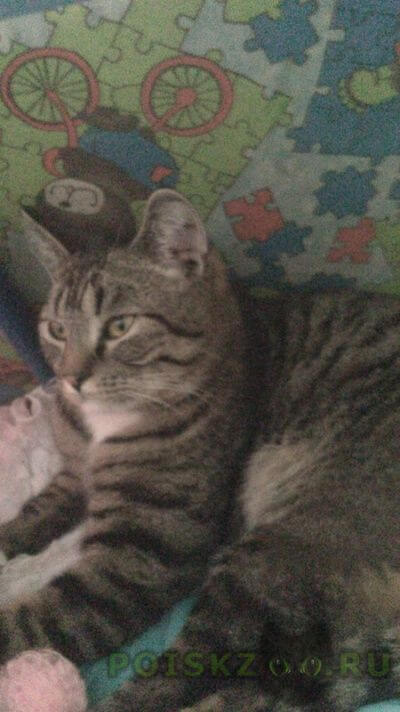 Пропал кот г.Орехово-Зуево